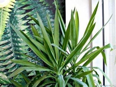 rośliny w salonie optycznym 2